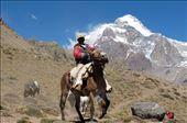 An 'arriero' (muleteer or mule driver) steadies his horse: by aconcagua, Views[25]
