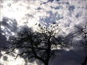 Squawky green parrots against gathering rain clouds.: by anijensen, Views[184]