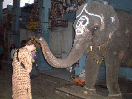 Elephant's Blessing!