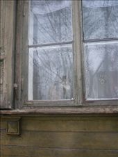 Cat looking through a window: by baskets_in_a_ring, Views[264]