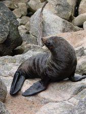 Seal at Separation Point, Abel Tasman National Park: by beckandphil, Views[181]