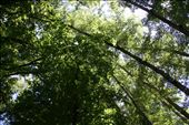 Canopy  - sun filters through the trees creating fabulous light: by beco, Views[48]