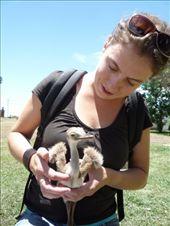 Digna met een kuiken emu (soort struisvogel), vet lief! : by brulboom, Views[576]