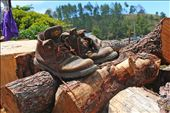 an old pair of boots weary of travel gives us a glimpse of what to expect ahead.: by carmendp, Views[16]