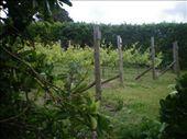 st martins vineyard: by chloe, Views[153]