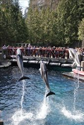 Dolphins at the aquarium: by chris_and_dusk, Views[95]