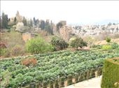The Generalife gardens used to feed the 200 residents of the Alhambra.: by dan_and_kim, Views[154]