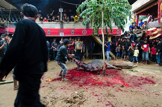 Indonesia Rituals Weddings And Funerals: While The Funeral Proceedings May Appear Gruesome To