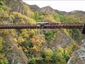 Bunji, by Queenstown, NZ: by djswanson, Views[113]