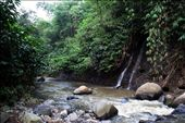 in a deeper jungle of West Java: by donaldsuhartanto, Views[117]