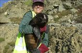Laura with a pup we just weighed and gave a hair cut for the population studies.: by dragon_slayer, Views[96]