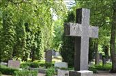 The cross' tiny t, denoting truth, is overtaken by giant trees, shrubs, and moss,  hovering above freshly raked sandy graves.: by dsbreit, Views[57]