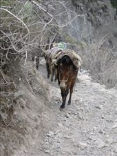 Road block up Colca Canyon: by elis82, Views[86]