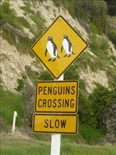 La nuit dans ce village des penguins se promenent dans les rues!: by emilpeace, Views[110]