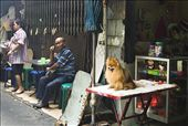 A local seems contemptuous of the tourists as the well-groomed dog looks on. : by fariha, Views[58]
