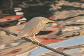 Vida no Ganges: by fernandoamarante, Views[27]