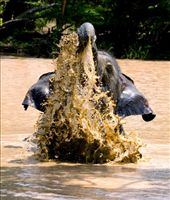 Elephant enjoying water hole after few heavy rains in this usually dry park.: by gamkath, Views[213]