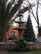 Fountain and Christmas tree in Plaza de Armas: by gemma, Views[420]