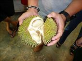 my first durian: by glimmerwing, Views[51]