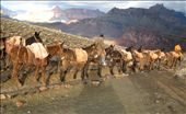 Met a 'mule-train' on its way to base camp with supplies.: by grandcanyonbirthdaydescent, Views[130]