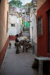 The donkey, I had lucky to find one the few people that still use animals.: by guanajuato, Views[35]