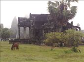 The lone horse in the Angkor Wat grounds: by houdyman, Views[67]