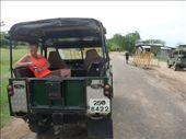 Ready to see safari: by ivanci, Views[86]
