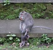 Go on Mum let me go, hes got food, Monkey Forest, Ubud, Bali, Indonesia.: by jambopablo, Views[79]