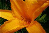 Pretty flower: by jamesanddan, Views[164]