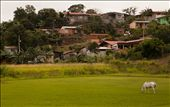 A horse grazing on a soccer field in Tilaran: by jamesdnapier, Views[33]