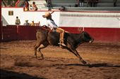The traditional bull riding (Jineteo de Toro).: by jerome_godichon, Views[389]