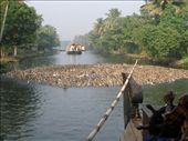 ducks in the backwaters, alleppey: by jessikat, Views[133]