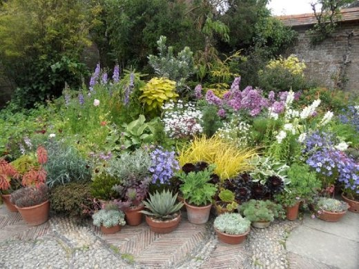 Great dixter perennials in pots back in the uk - Jardiniere de plantes aromatiques ...
