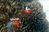 nemo really gets around!!!: by jo_and_matt, Views[71]