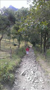 Track along valley - Valle de Cocora: by jugap, Views[35]