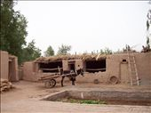 Donkey Cart.  Aliya's home, 2 hrs outside of Kashgar called Pazewat.: by katie_rose, Views[283]