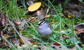 Winter Birds: by keithgardiner, Views[35]