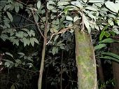 Snake in a tree deep in the jungle: by kiwiaoraki, Views[92]