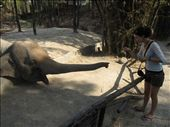 Chiang Mai Zoo : by landon_marie, Views[55]