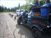 Summer dogsled training: by lburton, Views[82]
