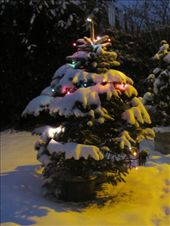 Alistair decorated the tree on the front lawn with Xmas lights: by locomocean, Views[60]