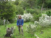Tierra del Fuego National Park.  Great flowers, great mountains, great rain, great sun!: by lynn, Views[307]
