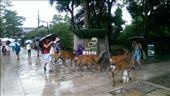 Todaiji Temple - Shp for idiots to buy food for the deer: by macedonboy, Views[21]