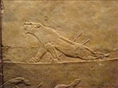 A wounded lioness: by mademal, Views[529]