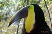 Toucan at the wildlife rescue center. : by margitpirsch, Views[153]