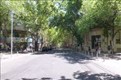 streets lined with Sequoia trees in Mendoza. : by margitpirsch, Views[16]