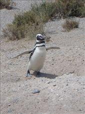 encore des petits pinguoins mais vous les aurez reconnus!: by maud-pierre, Views[81]