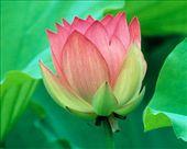 Shri Lakshmi: by maxons, Views[239]