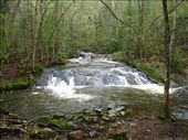 little creek in the woods: by michelefacciotto, Views[114]