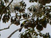 Tucan: by millmanapalm, Views[145]